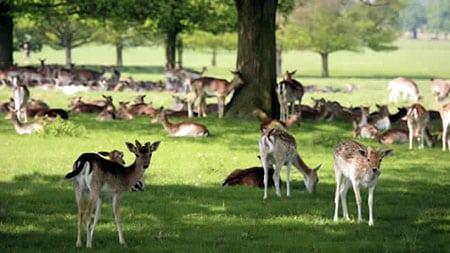 Лучшие парки Лондона