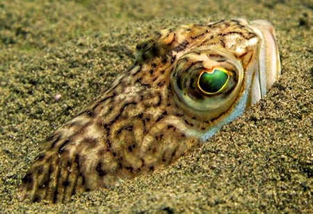 Самым опасным для человека обитателем Черного моря считается морской дракончик, искусно маскирующийся в песках