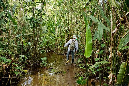Советы по выживанию в джунглях