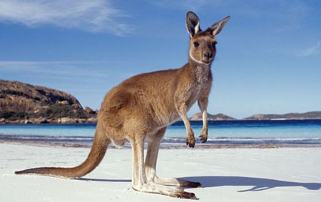 Жизнь в Австралии